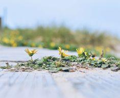 Flores camino a la playa Floral, Flower Photos, Drive Way, Beach, Naturaleza, Fotografia, Flowers, Flower
