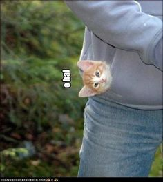 I normally can't stand cats but this one got me...