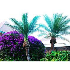 【konjiang】さんのInstagramをピンしています。 《#hawaii#maui#aloha#resort#natural#tree#bougainvillea #butterfly #relax#ocean#beach#sea#vacation#pohto #camela#pic#mauinokaoi#808#ハワイ#マウイ島#海#ビーチ#カメラ#写真》