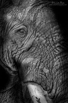Elephant Abstract by Rudi van den Heever, via 500px