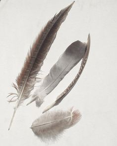 Feather Nature Photography Rustic by VictoriaEnglishCharm on Etsy