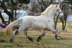 Discuss It's That Dales Pony at the Horse Chat forum - Horse Forums.