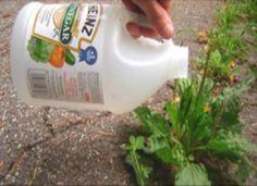 Salud al Día: Ella hecho vinagre en unas de sus plantas del jard...