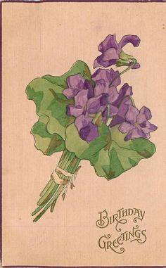1911 Violets postcard
