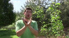 How to Prune Fruit Trees The Right Way Every Time Prune Fruit, Pruning Fruit Trees, Tree Pruning, Greenhouse Gardening, Gardening Tips, Garden Works, Drum Lessons, Tree Care, Wood Planters
