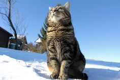 Ancient DNA Evidence Sheds New Light on Cat Domestication