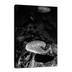 Mushroom on Log Black and White Canvas Botanical Wall Art and Limited Edition Fine Art by nature photographer Melissa Fague. Prints are available at: www.pipafineart.com Please follow us at: @pipafineart  #walldecor #wallhanging #homeaccessories #homedecore #wallart #photoprints #photoart #artwork #botanicalart #photography #nature #botanicaldecor  #wallartforsale #canvas #canvasart #canvasartwork #fineart #fineartphotography #photography #nature