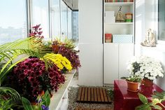 Best Plants for Indoor Air | Florist's Mum (Chrysanthemum morifolium) Folks love mums for their bright, happy blooms, but when the flowers fade after 6-8 weeks the plant is still busy removing benzene and other irritants from your indoor air. Benzene comes from glues, paints, furniture wax, and detergents. The biggest source is cigarette smoke. Credit: Meeha Meeha