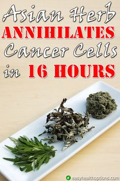 The Chinese have used this herb for over 2,000 years to break fevers, improve digestive health and expel parasites. But it's most impressive power to...