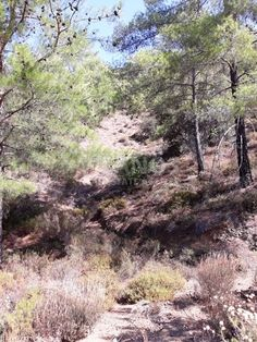 Code No: 10118 Residential land for sale in Louvaras village in Limassol.