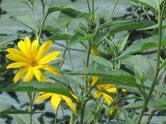 Flores da Italia. Plants, Flowers, Italia, Flora, Plant, Planting