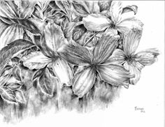 Lucky Lady graphite floral by Brenda Hill