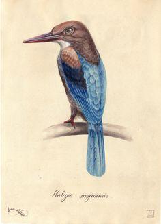 Watercolour illustrations of birds by Elena Limkina