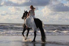 My daughter. Bruid op een Fries paard. Bergen aan zee. Foto zelf gemaakt.
