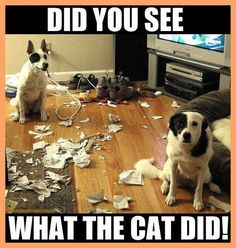 What The Cat Did