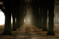 Allee by Frank Eiche