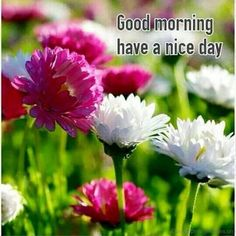 Good Morning Have A Nice Day 9