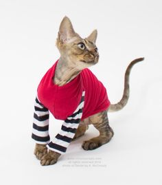 Cat Clothes for Cats. Soft Cat Sweater with sleeves. Cat Costume Simply Sphynx Cat / Dog clothes Pet Tops. Pet Dads Gift Mothers Day Gift by SimplySphynx