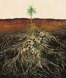 Mycorrhizae help feed your plants | Fine Gardening