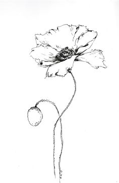 Simple Flower Drawing, Floral Drawing, Simple Flowers, Flower Art, Botanical Line Drawing, Botanical Illustration, Poppy Decor, Poppy Drawing, Ceramic Poppies
