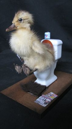 Taxidermy Duckling Ducky Dump Display by shrunkenheaddotcom, $40.00-Yes, you can buy this. o_O