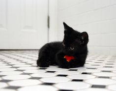 Black kittens are always cute...