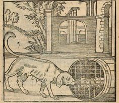 Gravure chien de chasse 1606/ Engraving hunting dog 1606