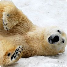 9 Ways You Can Help and Celebrate Polar Bears