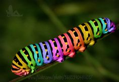 colored rainbow caterpillar - imagine the butterfly it will become. Beautiful Bugs, Beautiful Butterflies, Amazing Nature, Colorful Animals, Cute Animals, Beautiful Creatures, Animals Beautiful, Taste The Rainbow, Bugs And Insects