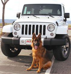 24 New Ideas suv cars jeep Super Cute Puppies, Cute Baby Dogs, Cute Little Puppies, Cute Dogs And Puppies, Doggies, Suv Cars, Jeep Cars, Jeep Jeep, Cute Funny Animals