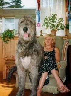 That is one large dog!