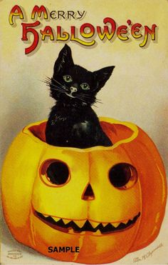 Love the vintage cats and pumpkins