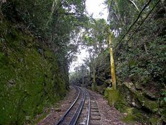 Trilhos que levam ao Cristo Redentor - Trenzinho - Floresta - Verde - Rio de Janeiro - Brasil - Brazil