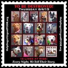 16 BEAUTIFUL LIVES TO BE DESTROYED 06/04/15- Please share their story and be their voice. This is a VERY HIGH KILL facility, so time is critical. YOU may be their ONY HOPE!-To rescue a Death Row Dog, Please read this:http://information.urgentpodr.org/adoption-info-and-list-o…/ To view the full album, please click here: http://nycdogs.urgentpodr.org/tbd-dogs-page/ http://nycdogs.urgentpodr.org/to-be-destroyed-4915/