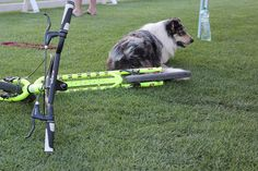 Kostka kolobežky DogFest 2015 Outdoor Power Equipment, Garden Tools