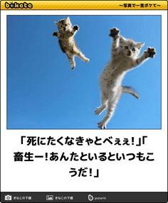 5秒でやられる!職場で見てはいけない動物の爆笑ボケて11選 | 笑うメディア クレイジー Cute Baby Animals, Animals And Pets, Funny Animals, Funny Comics, Funny Images, Funny Cats, Cute Babies, Cat Lovers, Laughter