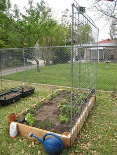 How to Build a Tomato Trellis with a Cattle Panel