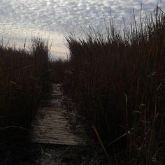 #carlsbadlagoon #reeds #carlsbad #nofilter #nofilterneeded #latergram #earliertoday by zombiecamille
