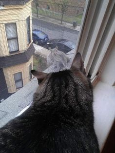 I see you, squirrel! Cats. Animals, Pets, Cat, Kittens, Feline