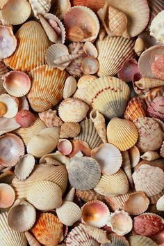 I love the beach, the ocean, and especially seashells!