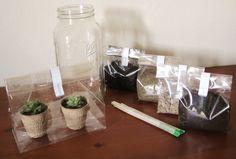 Mason Jar Succulent DIY Terrarium Kit Jaranium Garden by Jaranium