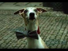 Elegantní pes/Elegant Dog
