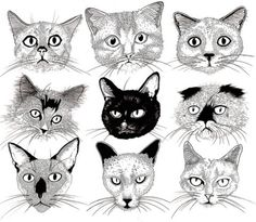 picassowannabe: CATS (by Lewis Illustration) Graphic Design Illustration, Illustration Art, Stray Cat Strut, Painting Collage, Here Kitty Kitty, Cat Face, Illustrations, Crazy Cat Lady, Animal Pictures