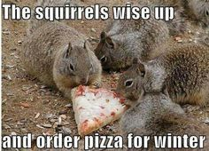 Pizza for squirrels
