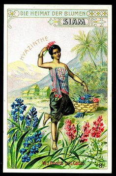 Tradecard - The Home of Flowers, Hyacinth | Boon's Dutch Coc… | Flickr