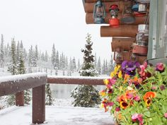 I call this End of Summer - Alaska Style because it was taken at the end of summer, 2014 and while the flowers were still blooming in the planter boxes, snow was already arriving.