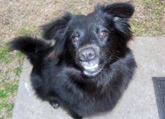Content Development Editor, Cindy Horbrook of Security Today's sweet, smilin' Lucy. Awwwww...