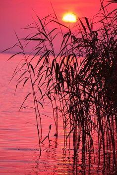 Sun setting on the lake reeds ~ Photo via photographers.com.ua