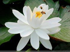 Hızlı tempolu dünya ne çiçekler, çok güzel!  - Bebek Düşler - yaşam Hisse güzel tadı onların mutluluğu paylaşmak için.