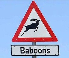 Funny Baboon Sign
